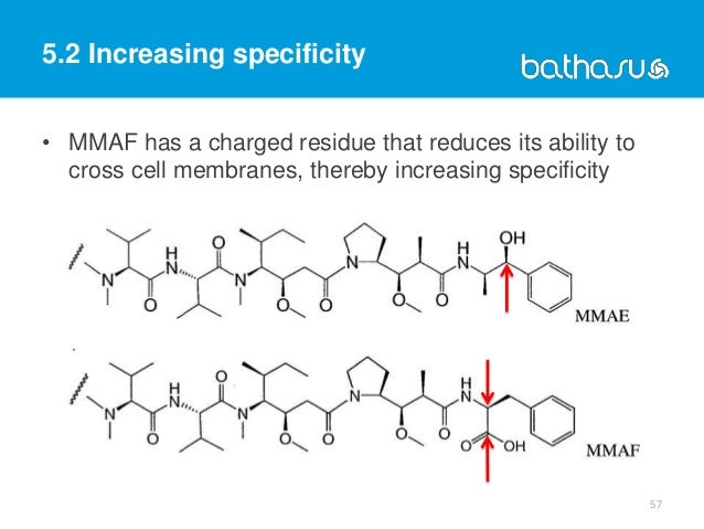 57 • MMAF has a charged residue that reduces its ability to cross cell membranes, thereby increasing specificity 5.2 Incre...