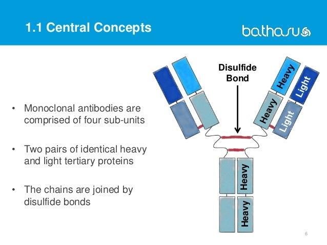 1.1 Central Concepts • Monoclonal antibodies are comprised of four sub-units • Two pairs of identical heavy and light tert...
