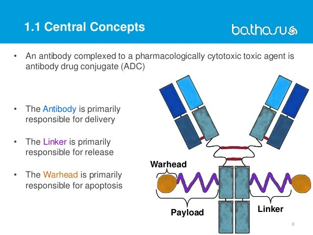 • An antibody complexed to a pharmacologically cytotoxic toxic agent is antibody drug conjugate (ADC) • The Antibody is pr...