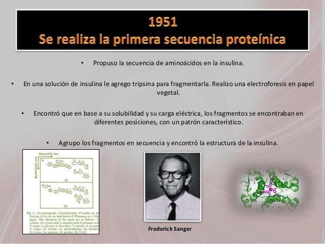 • Propuso la secuencia de aminoácidos en la insulina. • En una solución de insulina le agrego tripsina para fragmentarla. ...