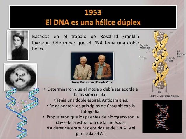 • Basados en el trabajo de Rosalind Franklin lograron determinar que el DNA tenia una doble hélice. • Determinaron que el ...