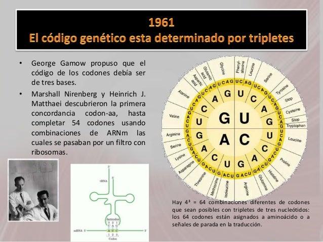 • George Gamow propuso que el código de los codones debía ser de tres bases. • Marshall Nirenberg y Heinrich J. Matthaei d...