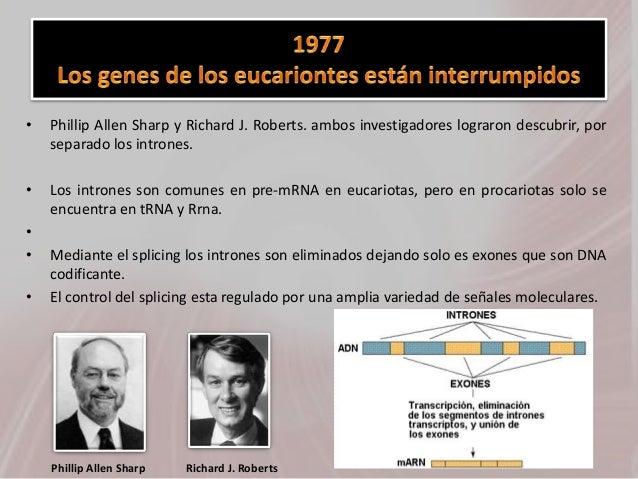 • Phillip Allen Sharp y Richard J. Roberts. ambos investigadores lograron descubrir, por separado los intrones. • Los intr...