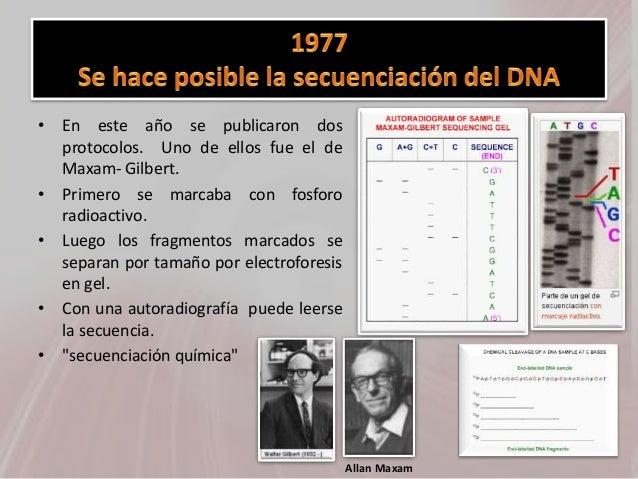 • En este año se publicaron dos protocolos. Uno de ellos fue el de Maxam- Gilbert. • Primero se marcaba con fosforo radioa...
