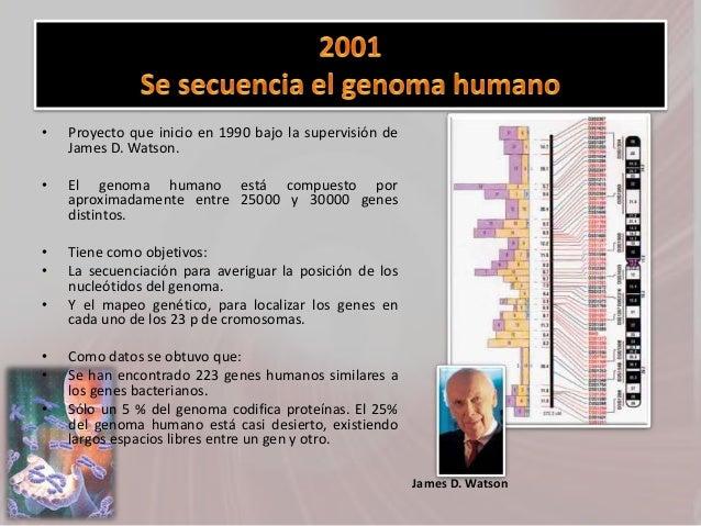 • Proyecto que inicio en 1990 bajo la supervisión de James D. Watson. • El genoma humano está compuesto por aproximadament...