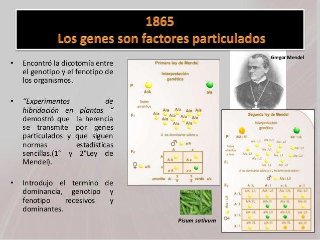 """• Encontró la dicotomía entre el genotipo y el fenotipo de los organismos. • """"Experimentos de hibridación en plantas """" dem..."""
