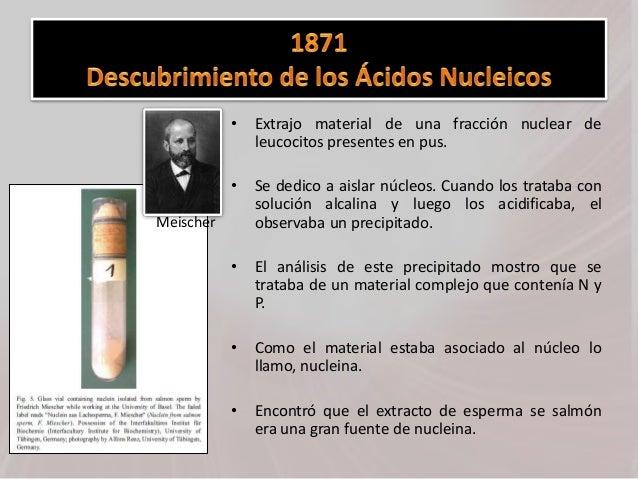 • Extrajo material de una fracción nuclear de leucocitos presentes en pus. • Se dedico a aislar núcleos. Cuando los tratab...