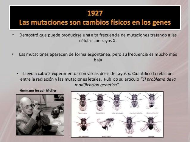 • Demostró que puede producirse una alta frecuencia de mutaciones tratando a las células con rayos X. • Las mutaciones apa...