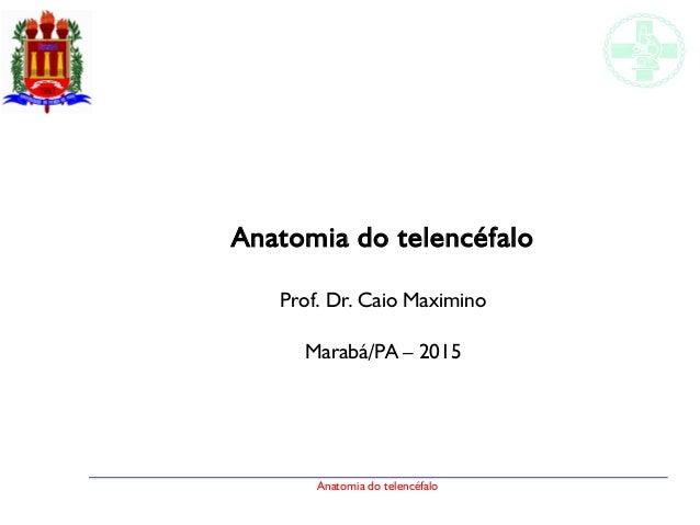 Anatomia do telencéfalo Anatomia do telencéfalo Prof. Dr. Caio Maximino Marabá/PA – 2015