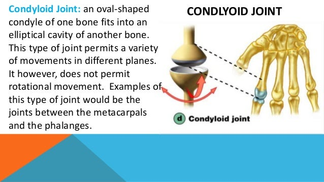 Joints movement and sukshma vyayam Condyloid Joint Examples