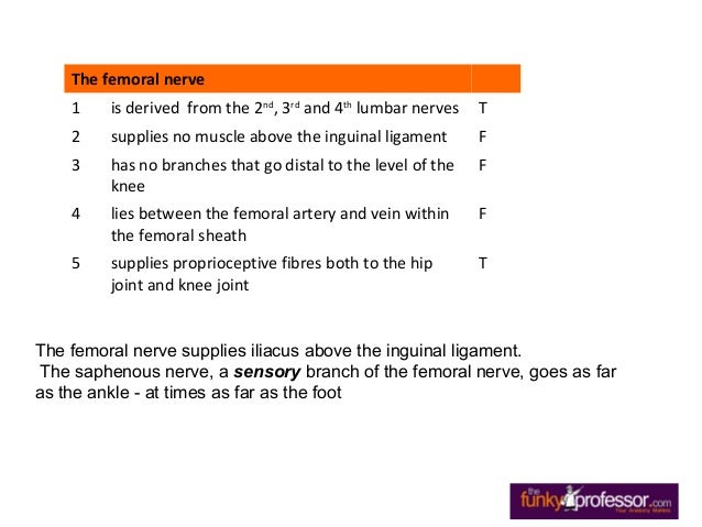 exam questions femoral triangle,