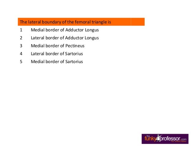 Exam Questions Femoral Triangle Slide 2