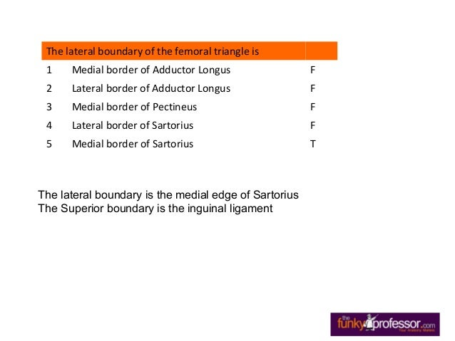 Exam Questions Femoral Triangle Slide 3