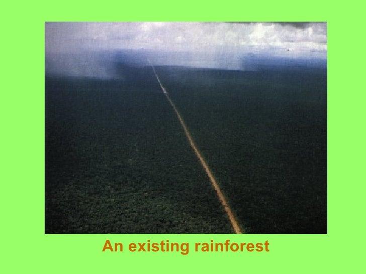 An existing rainforest