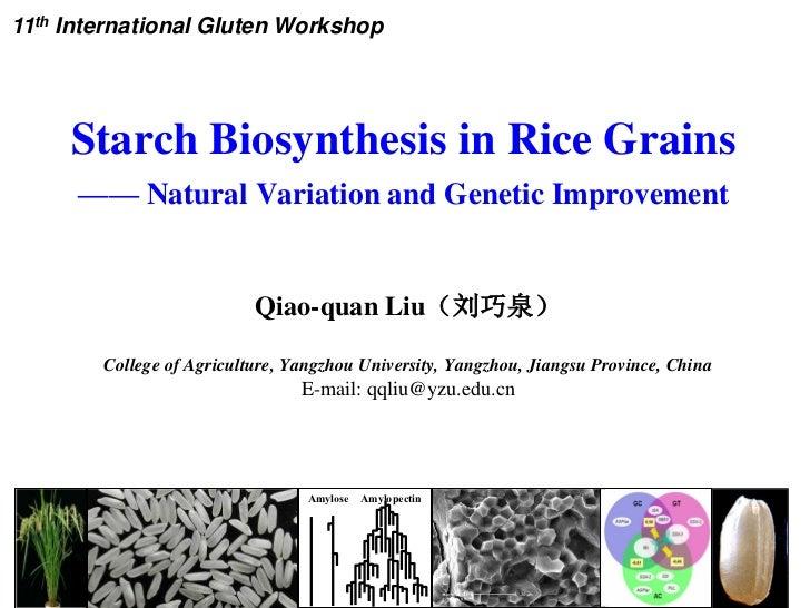 11th International Gluten Workshop     Starch Biosynthesis in Rice Grains      —— Natural Variation and Genetic Improvemen...