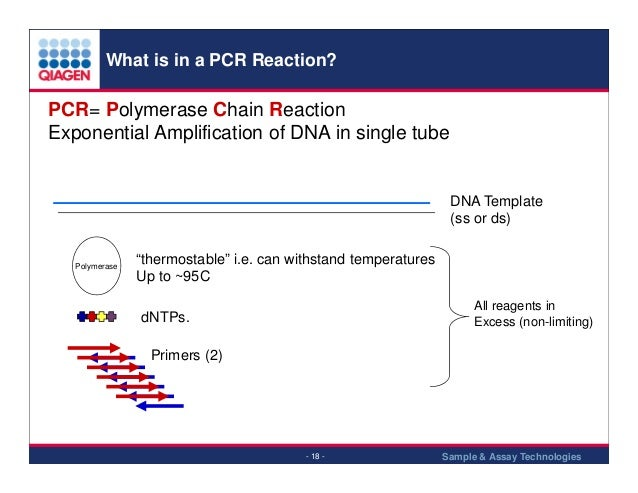 how much template dna for pcr - q pcr introduction 2013