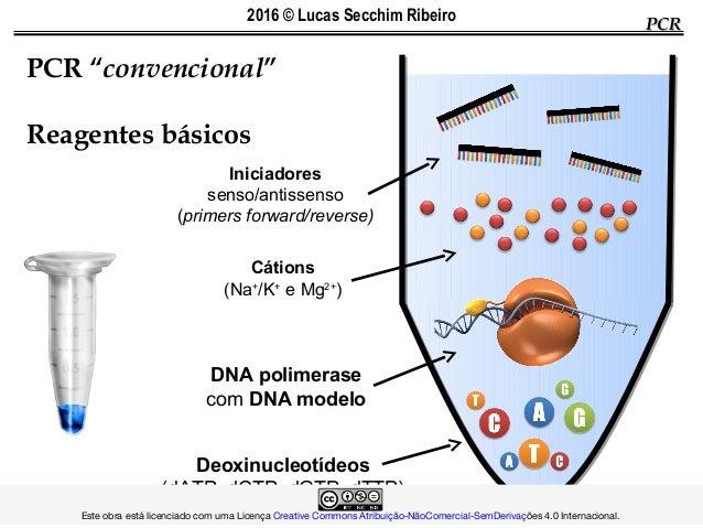"""PCR """"convencional"""" Reagentes básicos PCRPCR Iniciadores senso/antissenso (primers forward/reverse) Cátions (Na+ /K+ eMg2..."""