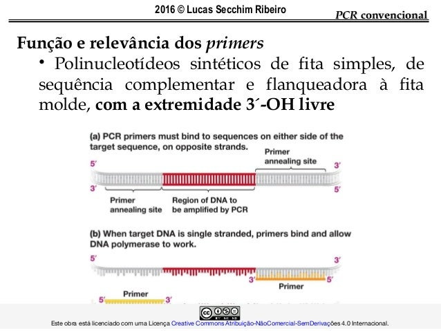 Função e relevância dos primers • Polinucleotídeos sintéticos de fita simples, de sequência complementar e flanqueadora à ...