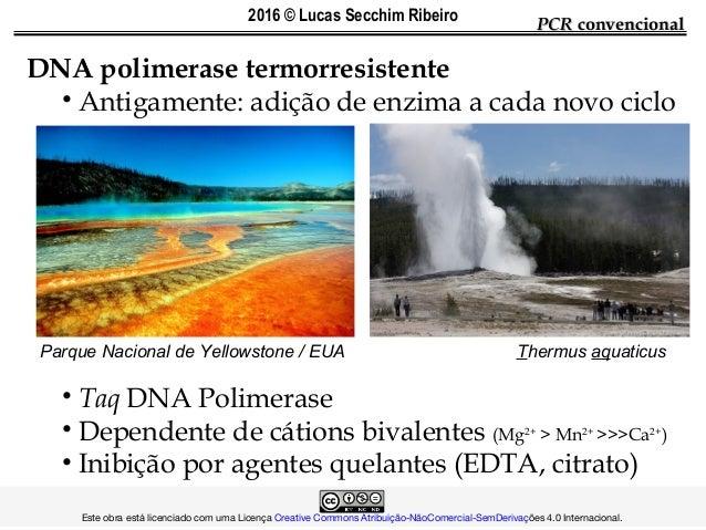 DNA polimerase termorresistente • Antigamente: adição de enzima a cada novo ciclo • Taq DNA Polimerase • Dependente de cát...