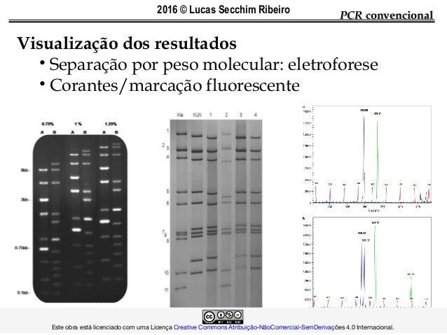 PCRPCR convencionalconvencional Visualização dos resultados • Separação por peso molecular: eletroforese • Corantes/marcaç...