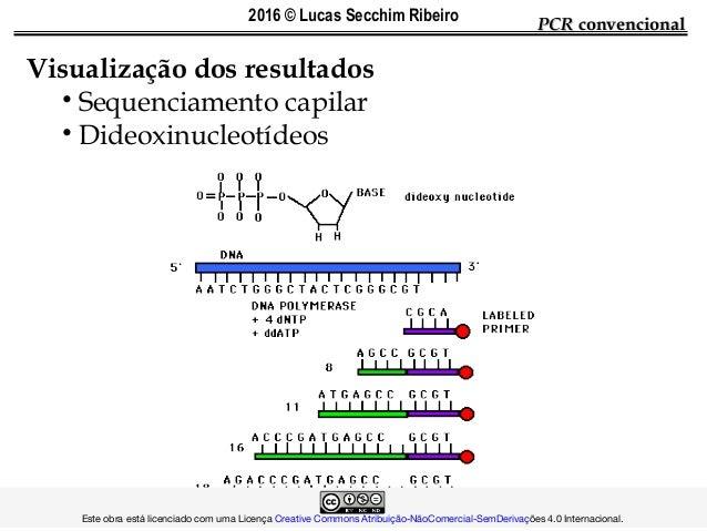 Visualização dos resultados • Sequenciamento capilar • Dideoxinucleotídeos PCRPCR convencionalconvencional ...
