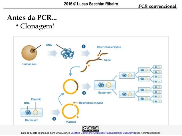 PCRPCR convencionalconvencional Antes da PCR... • Clonagem!  Este obra está licenciado com uma Lic...