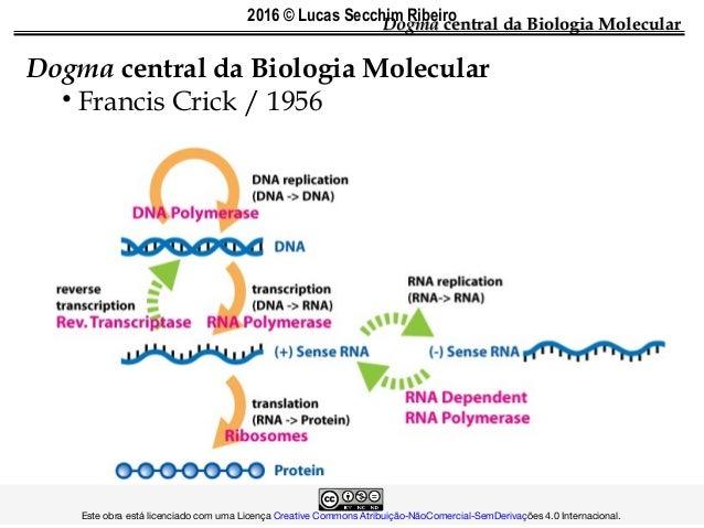 DogmaDogma central da Biologia Molecularcentral da Biologia Molecular Dogma central da Biologia Molecular • Francis Crick ...