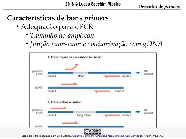 Características de bons primers • Adequação para qPCR • Tamanho do amplicon • Junção exon-exon e contaminação com gDNA Des...