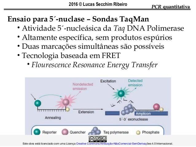 PCRPCR quantitativaquantitativa Ensaio para 5´-nuclase – Sondas TaqMan • Atividade 5´-nucleásica da Taq DNA Polimerase • A...