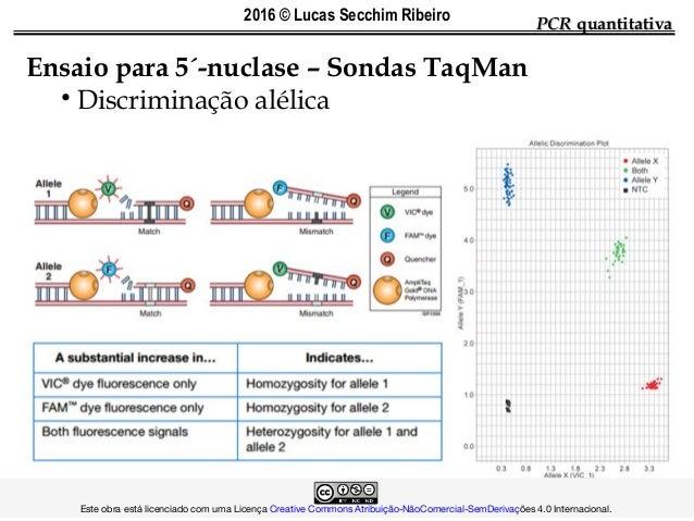 PCRPCR quantitativaquantitativa Ensaio para 5´-nuclase – Sondas TaqMan • Discriminação alélica  Es...