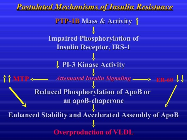 Postulated Mechanisms of Insulin ResistancePostulated Mechanisms of Insulin Resistance PTP-1BPTP-1B Mass & ActivityMass & ...