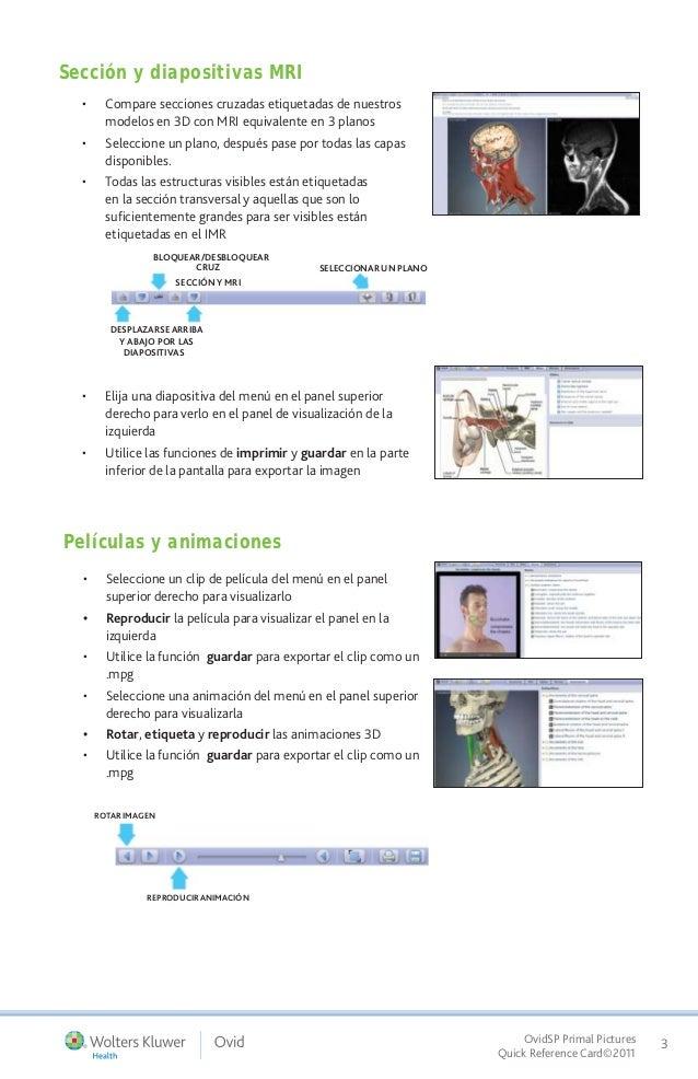 Guía de uso de Primal Pictures