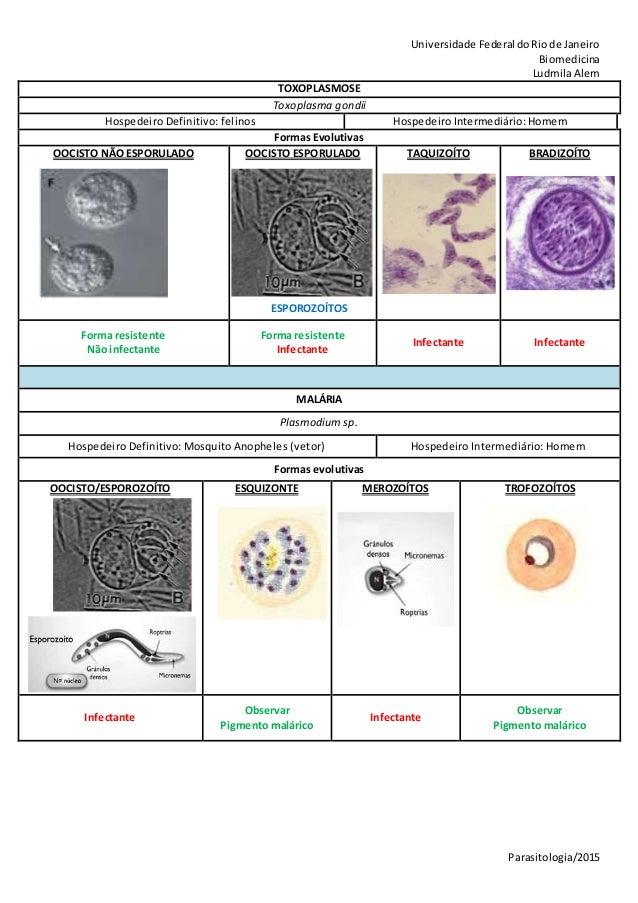 Universidade Federal doRiode Janeiro Biomedicina LudmilaAlem Parasitologia/2015 TOXOPLASMOSE Toxoplasma gondii Hospedeiro ...