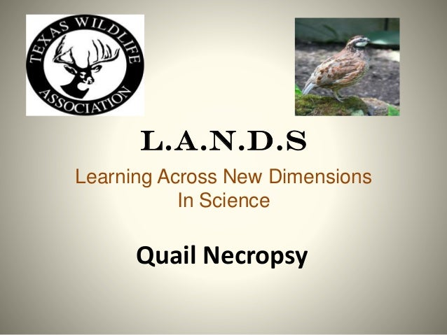L.A.N.D.S Learning Across New Dimensions In Science  Quail Necropsy