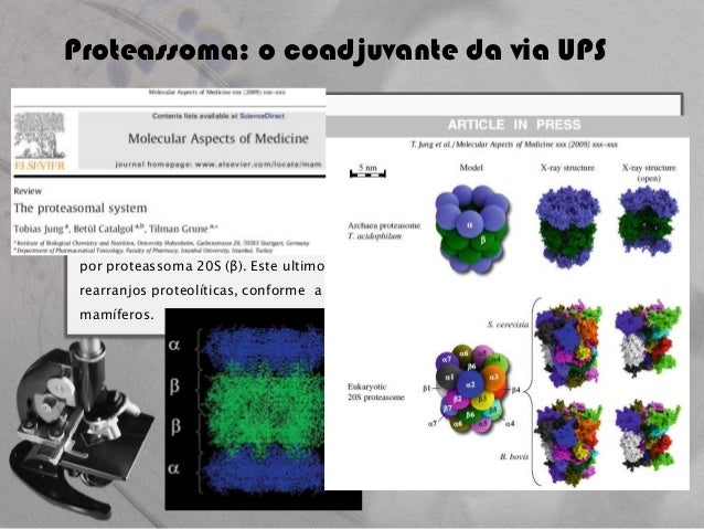 Thesis on ubiquitin