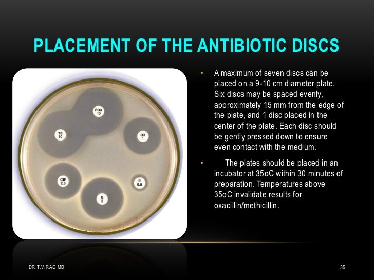 Kirby Bauer Disc Diffusion Method Antibiotic