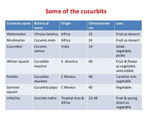 herbivores animals list