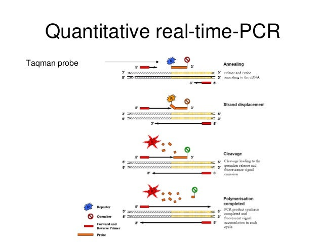 Quantitative real time polymerase chain reaction rt qpcr