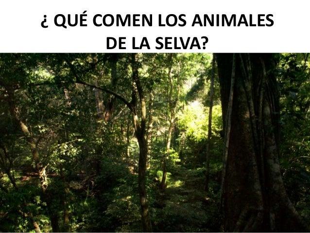 ¿ QUÉ COMEN LOS ANIMALESDE LA SELVA?