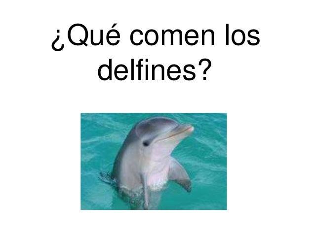 ¿Qué comen losdelfines?