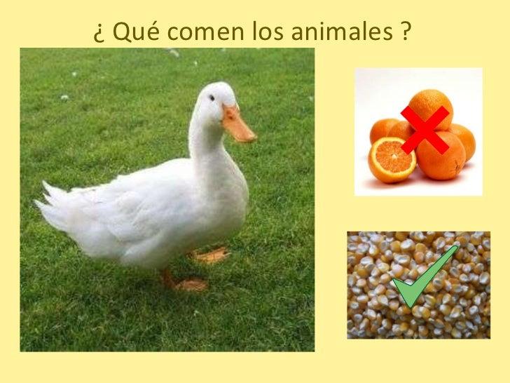 Q Comen Los Flamingos Que Comen Los Animales