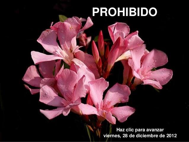 PROHIBIDO       Haz clic para avanzar viernes, 28 de diciembre de 2012