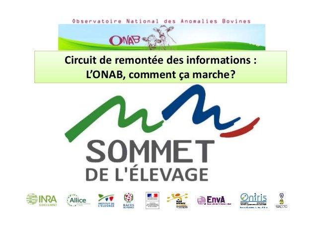 Circuitderemontéedesinformations: L'ONAB,commentçamarche?