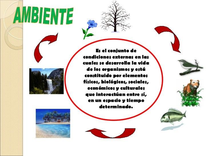 Que es el ambiente - Como humidificar el ambiente ...