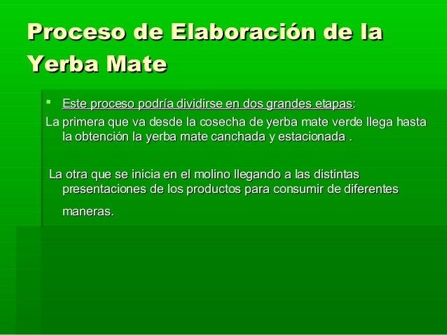 Circuito Productivo De La Yerba Mate : Que es la yerba mate