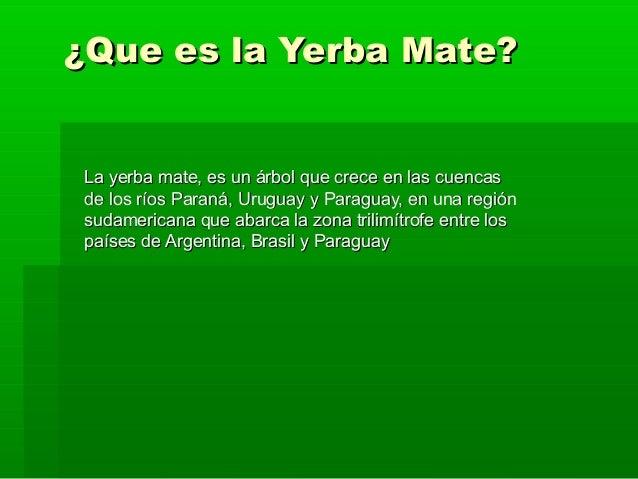 ¿Que es la Yerba Mate?La yerba mate, es un árbol que crece en las cuencasde los ríos Paraná, Uruguay y Paraguay, en una re...