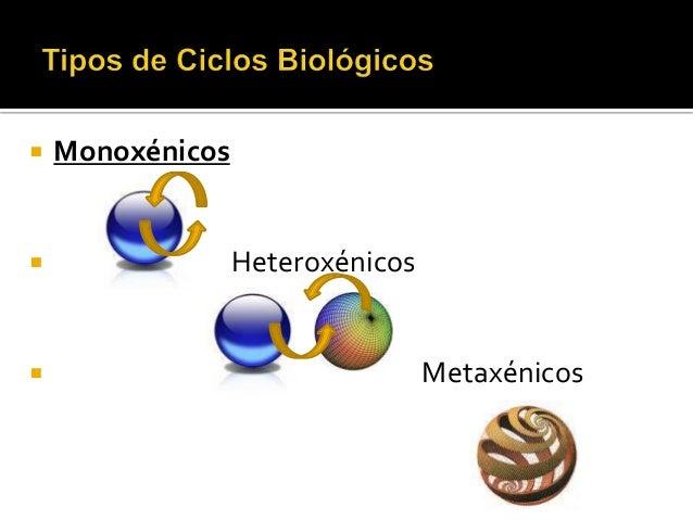  Monoxénicos  Heteroxénicos  Metaxénicos