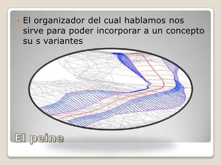 El peine<br />El organizador del cual hablamos nos sirve para poder incorporar a un concepto  su s variantes<br />