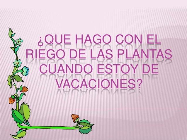 ¿QUE HAGO CON EL RIEGO DE LAS PLANTAS CUANDO ESTOY DE VACACIONES?