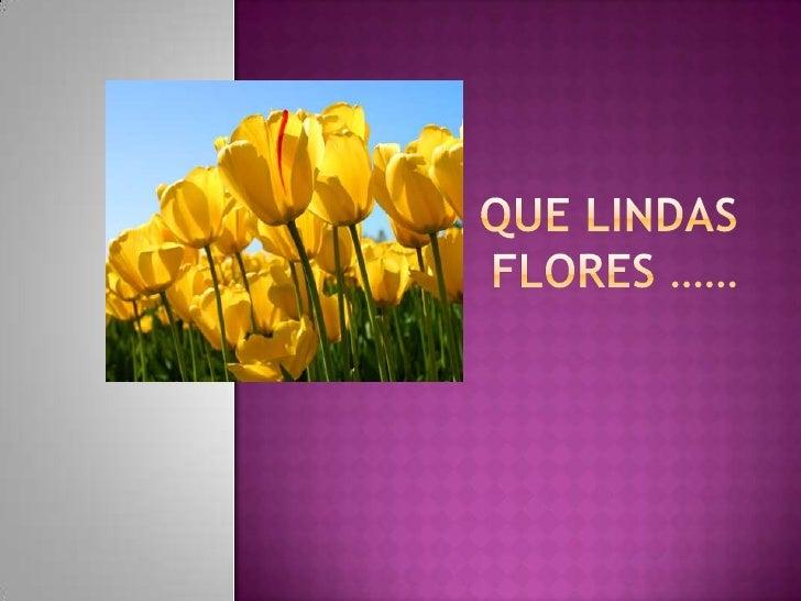 Que lindas flores ……<br />
